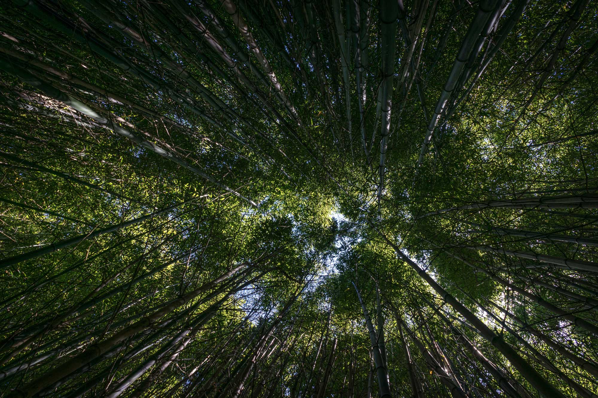 Conserving Our Future Forests Through Partnerships