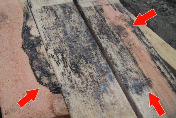 Mold & Lumber